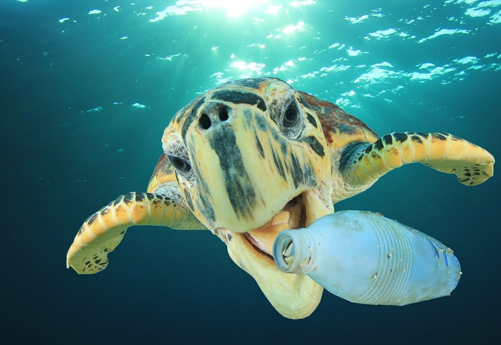 A Sea Turtle in the process of consuming a plastic bottle